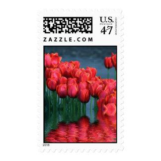 Tulips flooded.jpg - Customized Postage