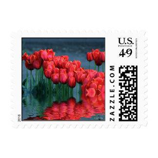 Tulips flooded.jpg postage