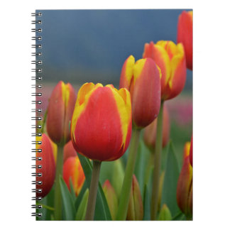Tulips for Mom Notebook