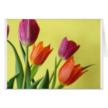 Tulips for You Cards