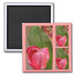 Tulips for You Magnet