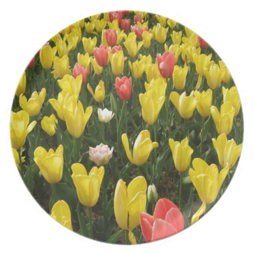 Tulips from Holland, Springtime at Keukenhof Party Plates