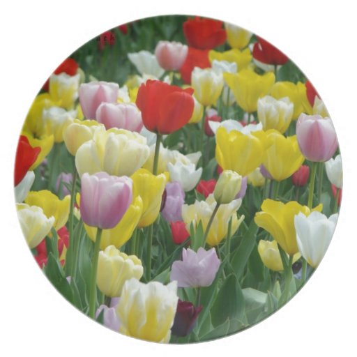 Tulips from Holland, Springtime at Keukenhof Dinner Plates