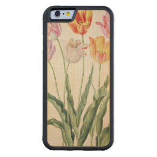 Tulips, from the 'Nassau Florilegium' (w/c on pape Carved Maple iPhone 6 Bumper Case