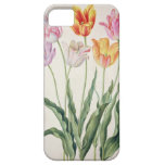 Tulips, from the 'Nassau Florilegium' (w/c on pape iPhone 5 Covers