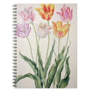 Tulips, from the 'Nassau Florilegium' (w/c on pape Notebook
