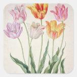 Tulips, from the 'Nassau Florilegium' (w/c on pape Square Sticker