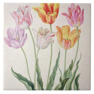 Tulips, from the 'Nassau Florilegium' (w/c on pape Ceramic Tiles