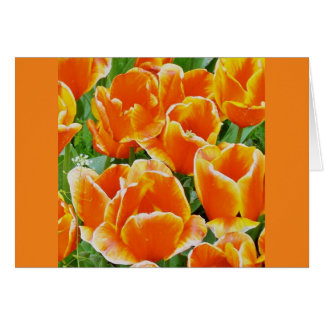 Tulips Galore! Stationary Greeting Cards