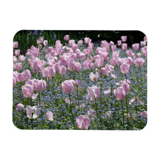 Tulips Garden Magnet