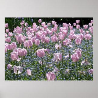 Tulips Garden Poster