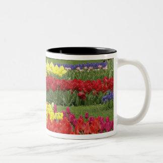 Tulips, Grape Hyacinth, and Daffodils, 2 Two-Tone Coffee Mug