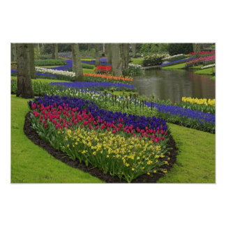 Tulips, Grape Hyacinth, and daffodils, Poster