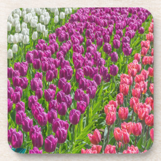 Tulips in 3 colors hard plastic coasters