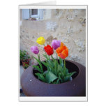 Tulips in a French Garden Greeting Card