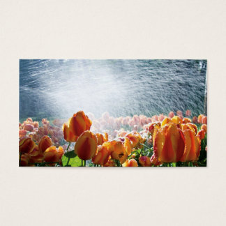 Tulips in a garden being sprayed with water business card