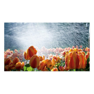 Tulips in a garden being sprayed with water business card template