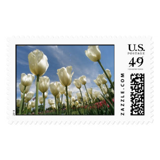 Tulips in Bloom Postage