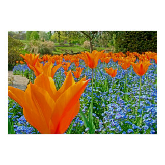 TULIPS IN GOLDERS HILL PARK PRINT