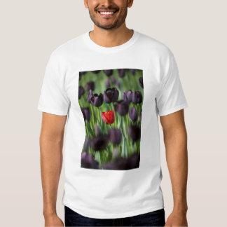 Tulips in Keukenhof Gardens, Amsterdam, T-shirt
