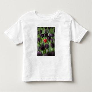 Tulips in Keukenhof Gardens, Amsterdam, Toddler T-shirt