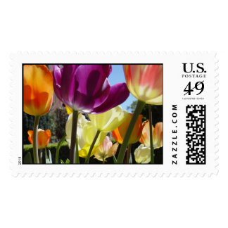 Tulips in sunlight postage stamp