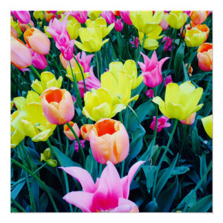 Tulips in the City Poster