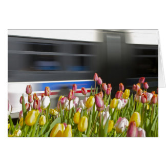 Tulips in the city wit card