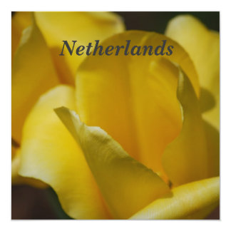 "Tulips in the Netherlands 5.25"" Square Invitation Card"