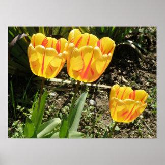 Tulips in the sun Print