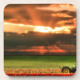 Tulips In The Sunset Beverage Coaster