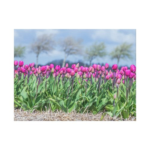 Tulips in the wind canvas print