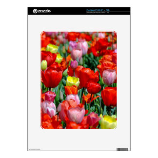 Tulips iPad Skins