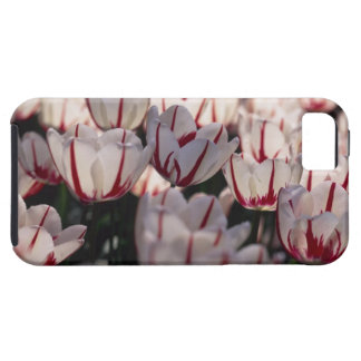 Tulips iPhone SE/5/5s Case