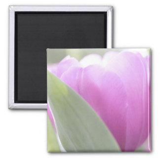 Tulips, Keukenhoff Gardens, Netherlands. 2 Fridge Magnets