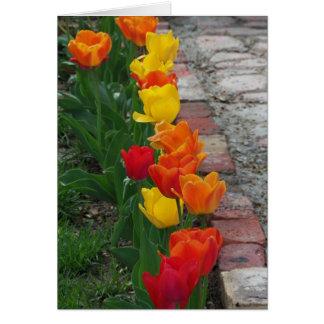 Tulips Lining The Walk Card
