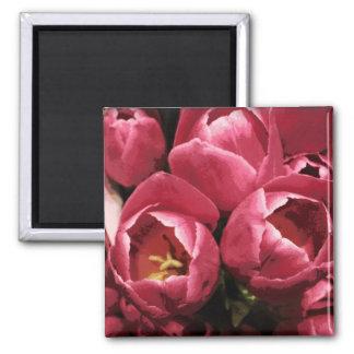 'Tulips' Magnet