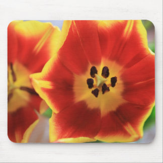 Tulips Mouse Pad