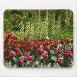 Tulips Mousepad   Mousepad Tulpen