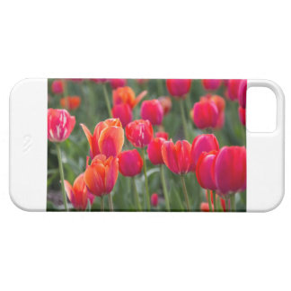 Tulips on a phone case iPhone 5 cases