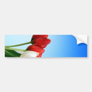 Tulips on Blue Background Bumper Sticker