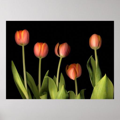 tulips - orange poster