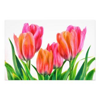 Tulips over white photographic print