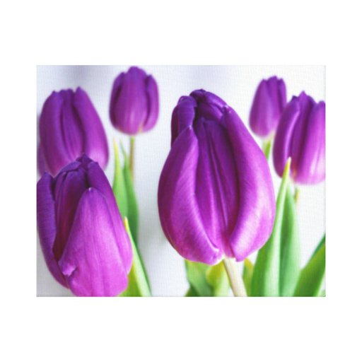 TULIPS PHOTOGRAPH WALL ART Wrapped Canvas Gallery Wrap Canvas