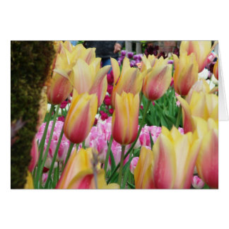Tulips - Pink and Yellow Card