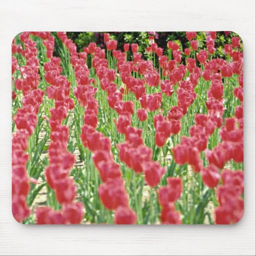Tulips Pink flowers Mouse Pad
