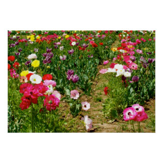 Tulips & Poppies Poster