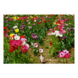 Tulips & Poppies Posters