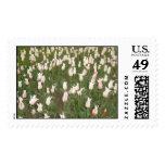 Tulips Postage Stamp