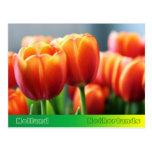 Tulips Postcard